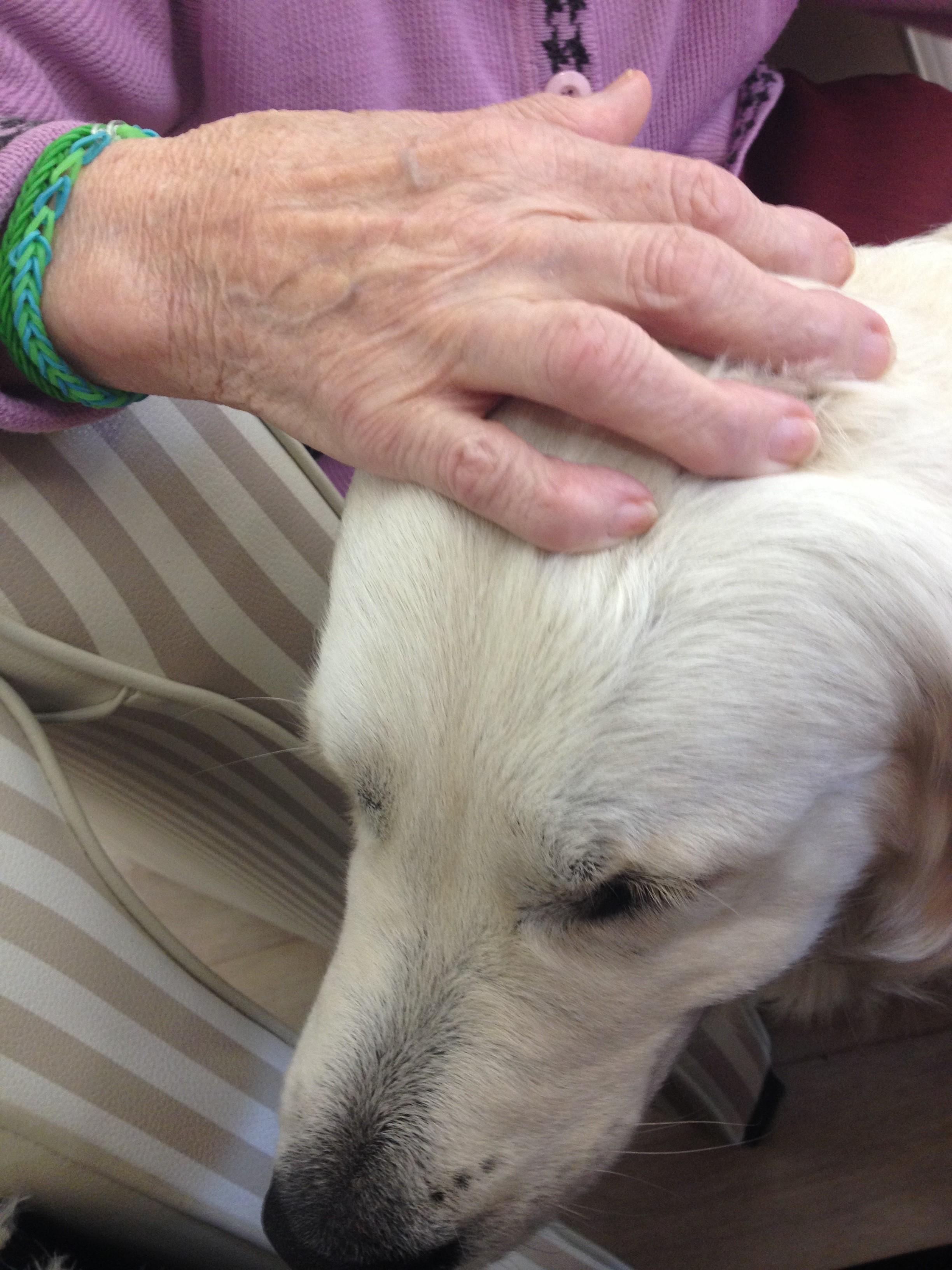dressage chien zoothérapie
